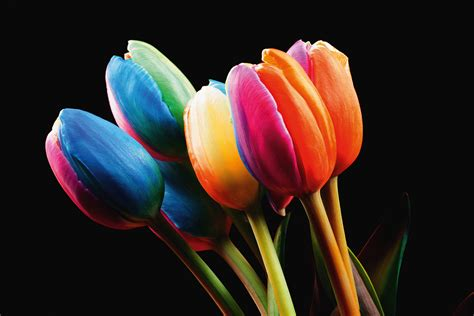 Anjers Tulpen Happy Colors | anjers tulpen happy colors