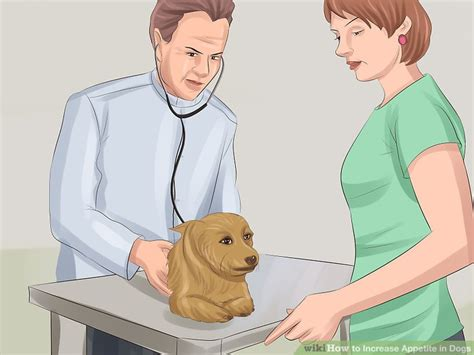 increased appetite in dogs 3 ways to increase appetite in dogs wikihow