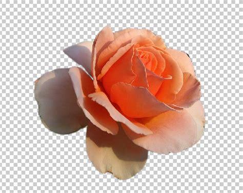 imagenes sin fondo gimp c 243 mo reflejar una imagen o texto en photoshop cofregrafico