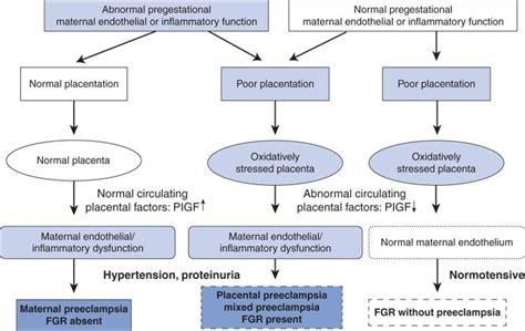 pathophysiology of hypertension flowchart pathophysiology of hypertension in flowchart create a