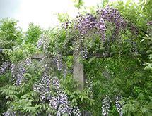 descrizione soggettiva di un giardino fiorella gilli vivaio giardino catalogo