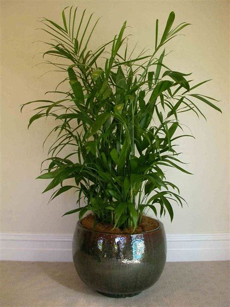 indoor plan houseplants that purify the air 171 pentacles and pastries