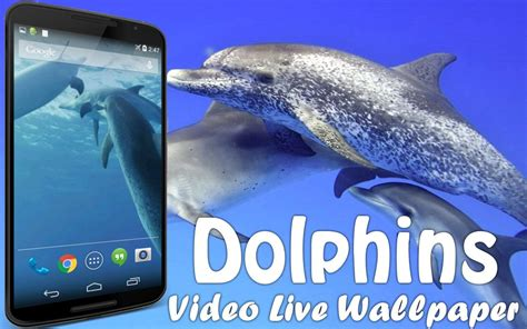 dolphin pro apk dolphins live wallpaper android apps on play