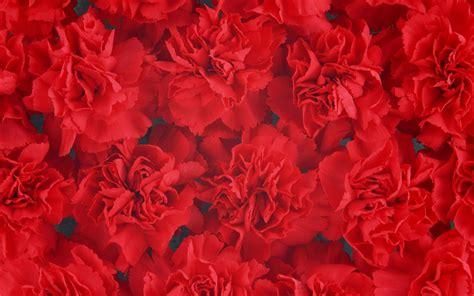 dia de las madres wallpapers fondos de pantalla para el dia de la d 237 a de la madre de los 225 lbumes de los fondos de escritorio