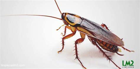 acabar con hormigas en casa 191 plaga de hormigas c 243 mo eliminar hormigas en casa