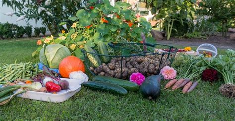 Free Photo Autumn Harvest Garden Vegetables Free Autumn Vegetable Garden