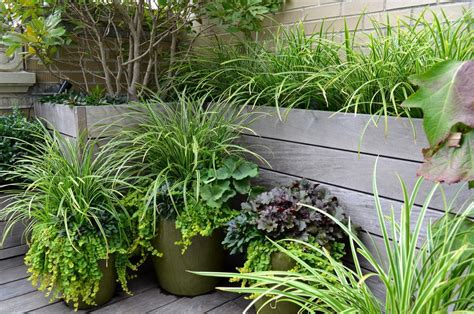 indoor plants nyc new york modern indoor plants porch traditional with