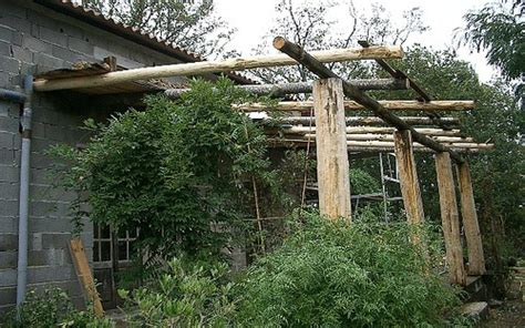 trellis for climbing plants insulating a house with climbing plants