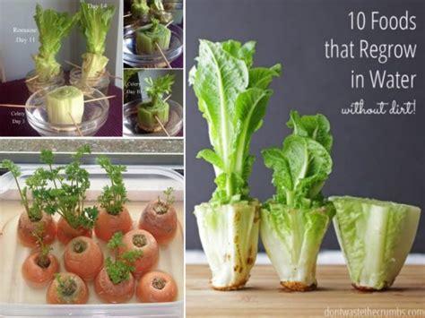 vegetables you can regrow regrow food kitchen scraps easily tutorial