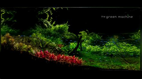 Tutorial Aquascape by Aquascape Tutorial Step By Step Spontaneity By Findley For The Green Machine