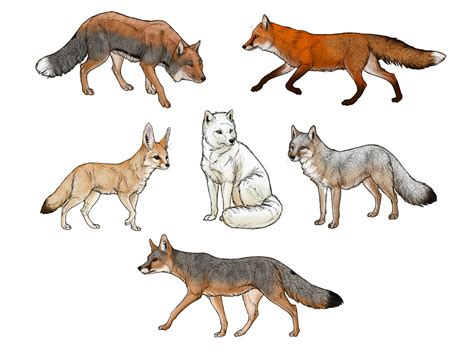 how to draw how to draw a fox step by step
