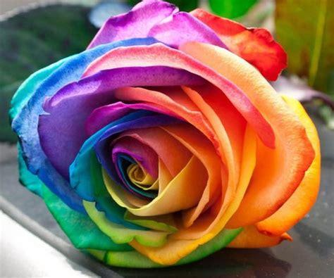 rainbow colored roses rainbow colored roses
