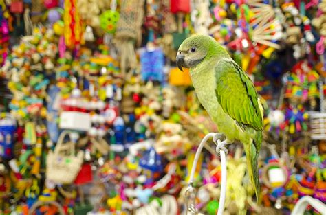 best pet shops for bird owners in los angeles 171 cbs los