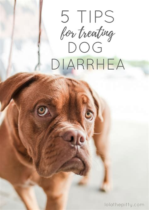 cure puppy diarrhea how do you cure diarrhea powerpointban web fc2