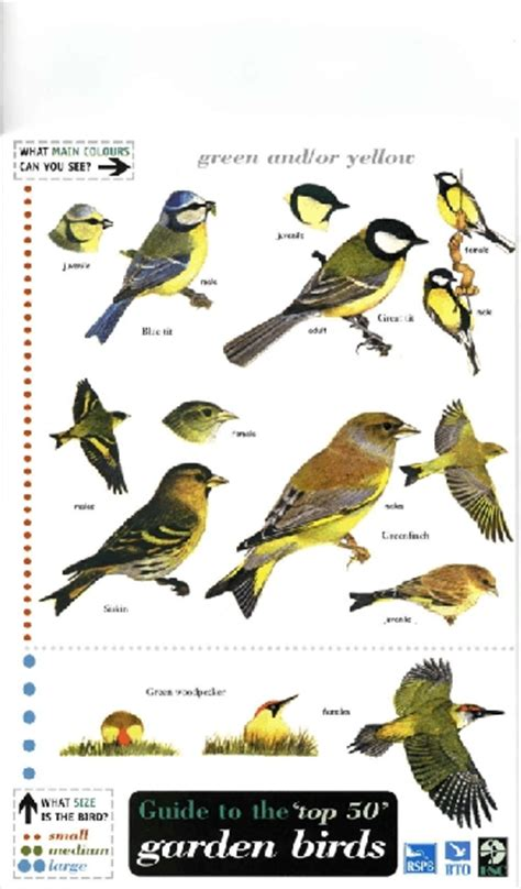 field guide birds roceco ecological products buy