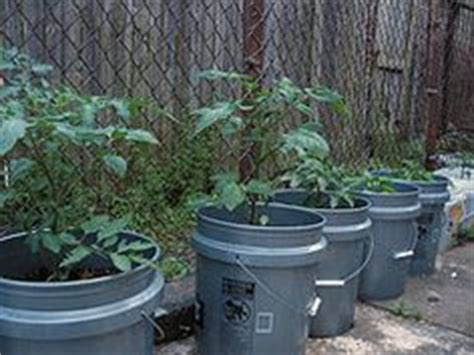 Portable Tomato Planter by 1000 Images About 5 Gallon Buckets On 5