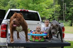 how much is a pitbull puppy worth children of the world s largest pitbull are now to become fearsome guard dogs