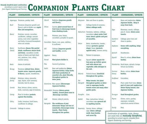 garden chart companion planting chart gardening ideas pinterest