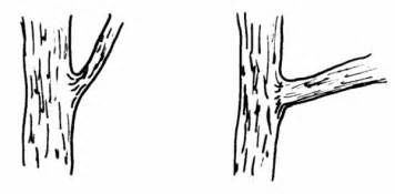 Tree Trunk With No Leaves Colouring Pages Page 3 sketch template