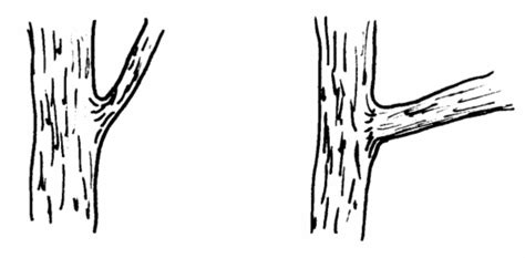 coloring pictures of tree trunks printable tree trunk coloring pages freecoloring4u com