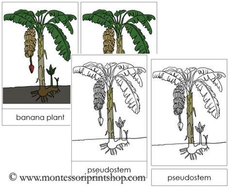 montessori materials flower nomenclature cards age 3 to 6 73 best images about montessori nomenclature in color