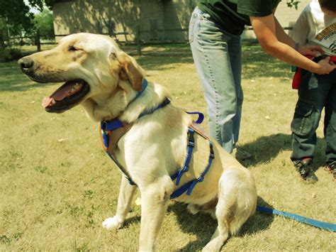 service dogs of america service dogs for america ptsd dogs