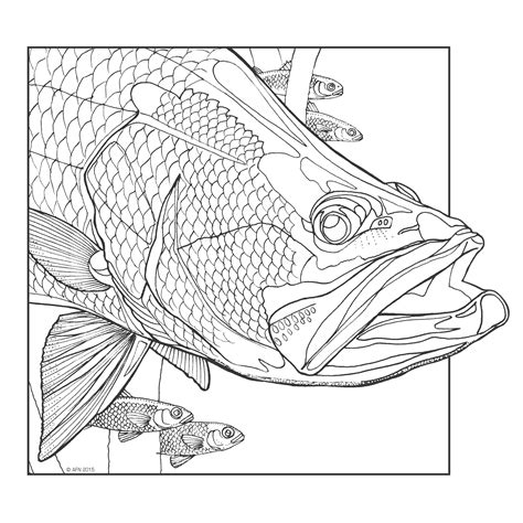coloring book zip chance complexions of the aquatic coloring book chance sales