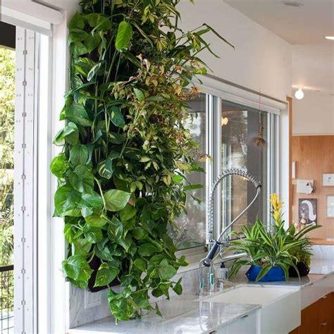 poudre blanche sur plantes d int rieur mur v 233 g 233 tal int 233 rieur en 80 id 233 es pour la maison 233 cologique