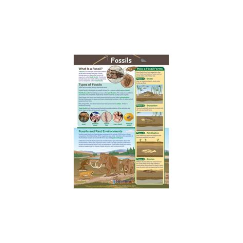how fossils are formed diagram diagram how fossils are formed for how were fossil