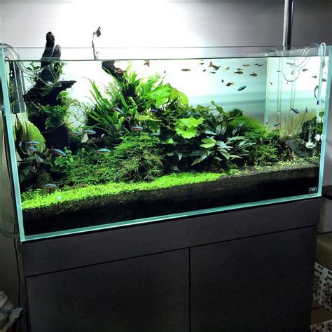 ada aquascaping 1000 images about aquascaping on pinterest nature galleries and plants