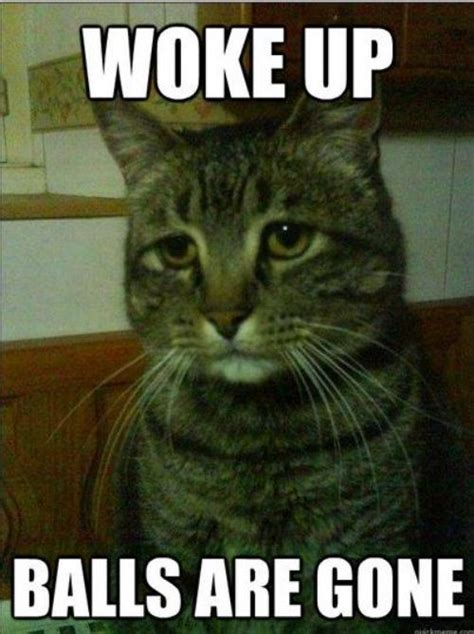 Cheer Up Cat Meme - britt leaves for 2 months dani dies 1 000 deaths britt