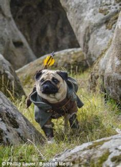 pug of the rings lord of the rings on legolas lotr and gandalf