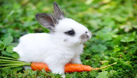 coniglio alimentazione alimentazione coniglio archivi palace
