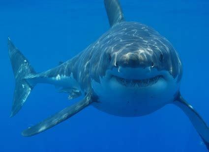 Freezer Kapal Ikan seekor ikan hiu di tangki mind genesis