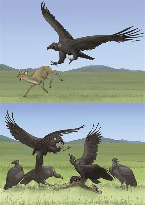 vultures scavenger or predator emily willoughby art