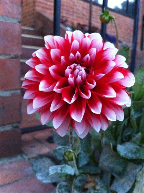 imagenes flores colombianas 135 mejores im 225 genes sobre flores colombianas en pinterest