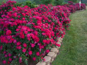 pelaez blog flower bed