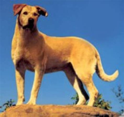 what of was yeller the world s top 20 dogs