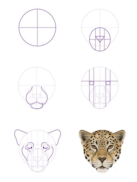 jaguar pattern drawing how to draw animals big cats their anatomy and patterns