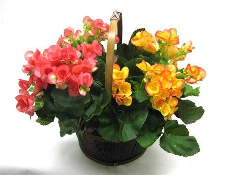 piante da interno con fiori fiori da interno ecco alcune variet 224 perfette per l