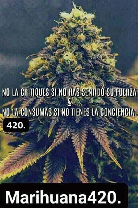 grifo weed weed 4 20 friends home facebook