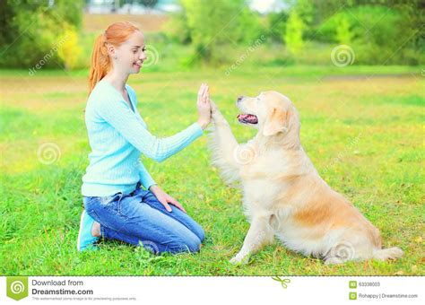 puppyhood a trained puppy a happy owner the happy owner golden retriever on grass