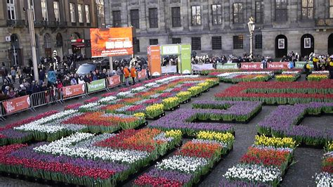 museum day amsterdam tulips season in holland history and events city life