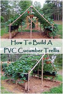 How To Build An Arbor Trellis by How To Build A Pvc Cucumber Trellis Shtf Prepping