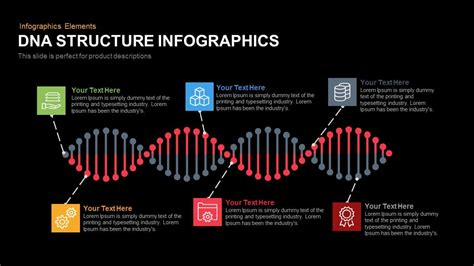 Dna Structure Powerpoint Template And Keynote Slide Slidebazaar Dna Powerpoint Template