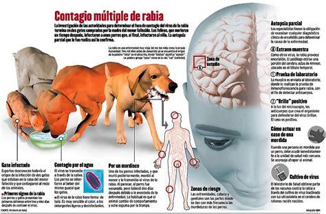 libro la rabia y el 191 sab 237 as por qu 233 la rabia se transmite principalmente entre las ratas zorros y ardillas