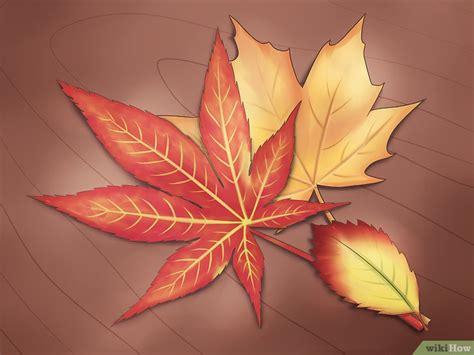 Aplikasi Daun Kering Pressed Leaf 6 formas de conservar las hojas de oto 241 o wikihow