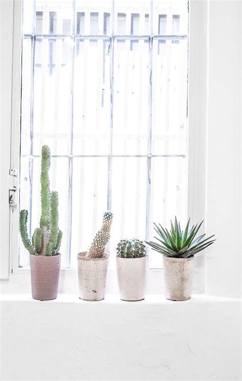 Window Sill Greenhouse Inspiration 25 Best Ideas About Window Plants On Pinterest Indoor Solar Lights Indoor House Plants And