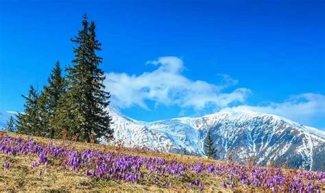 panorama fiori idee per il weekend 5 romantiche gite di primavera