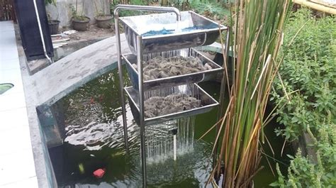 cara membuat filter air kolam ikan koi cara membuat filter kolam ikan mudah dan cepat lengkap